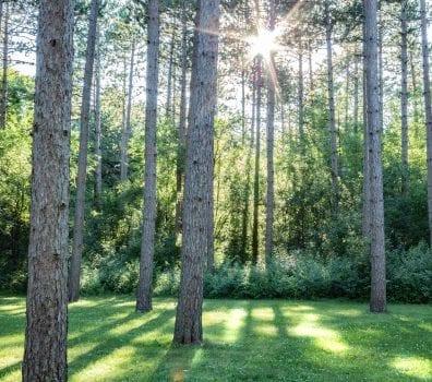 Kettle Moraine Trees